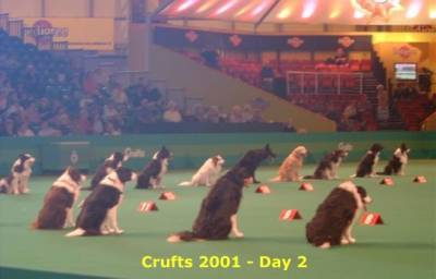 http://www.sportdog.ru/articles/obedience/images/craftvyd_small.jpg
